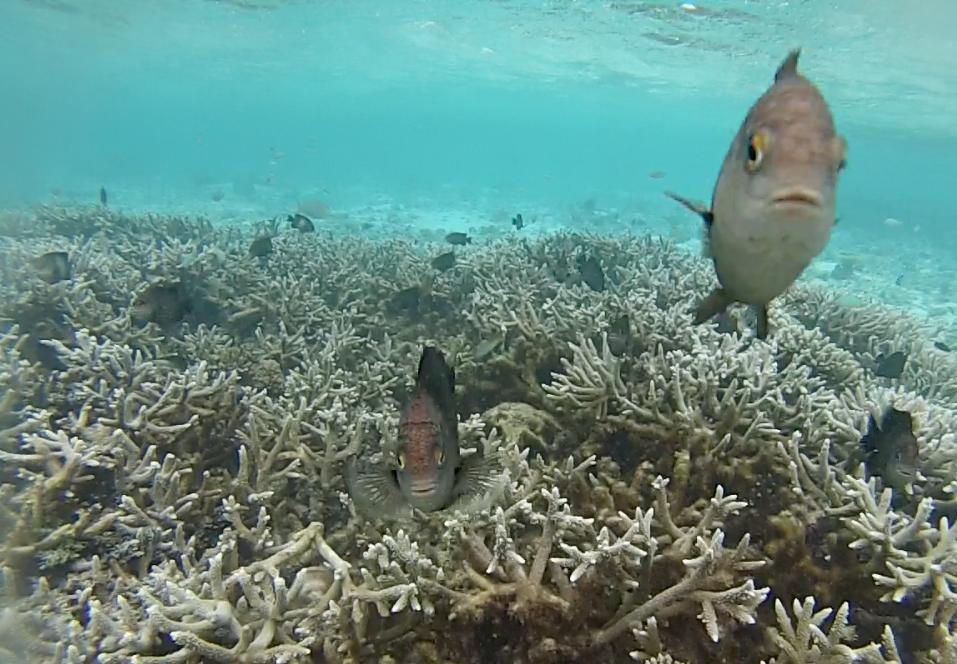 snorkel velassaru resort hotel - dicas de viagem lua de mel nas ilhas maldivas