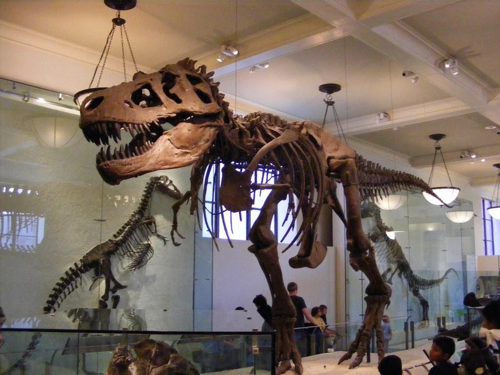 07 museus esqueletos dinossauros museu de historia natural - dicas de viagem nova york NY