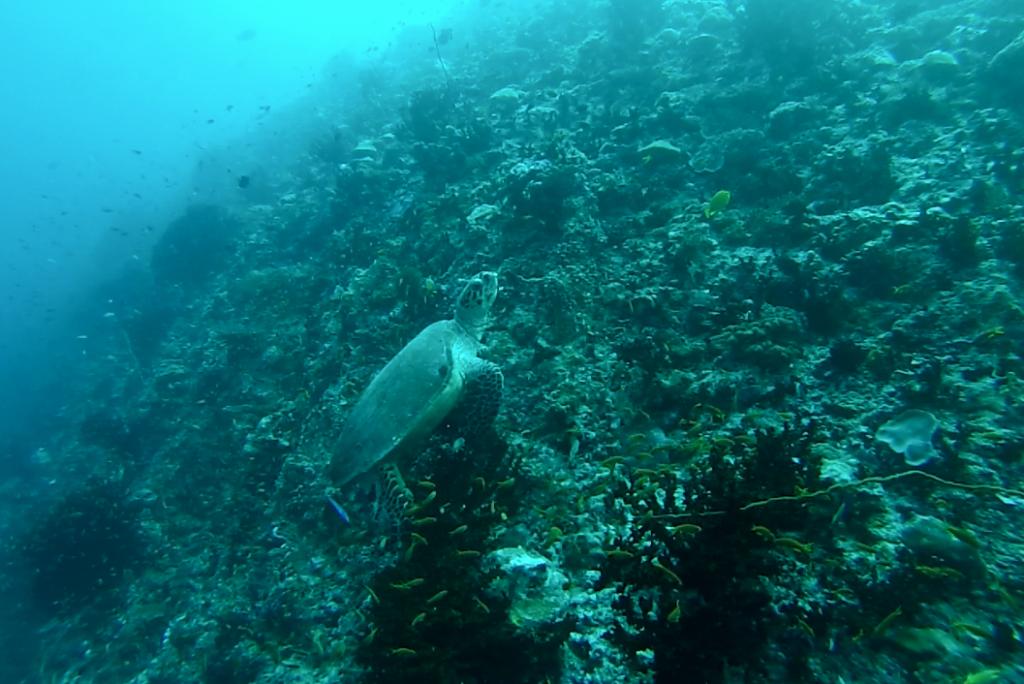 mergulho cilindro scuba diving velassaru resort hotel - dicas de viagem lua de mel nas ilhas maldivas