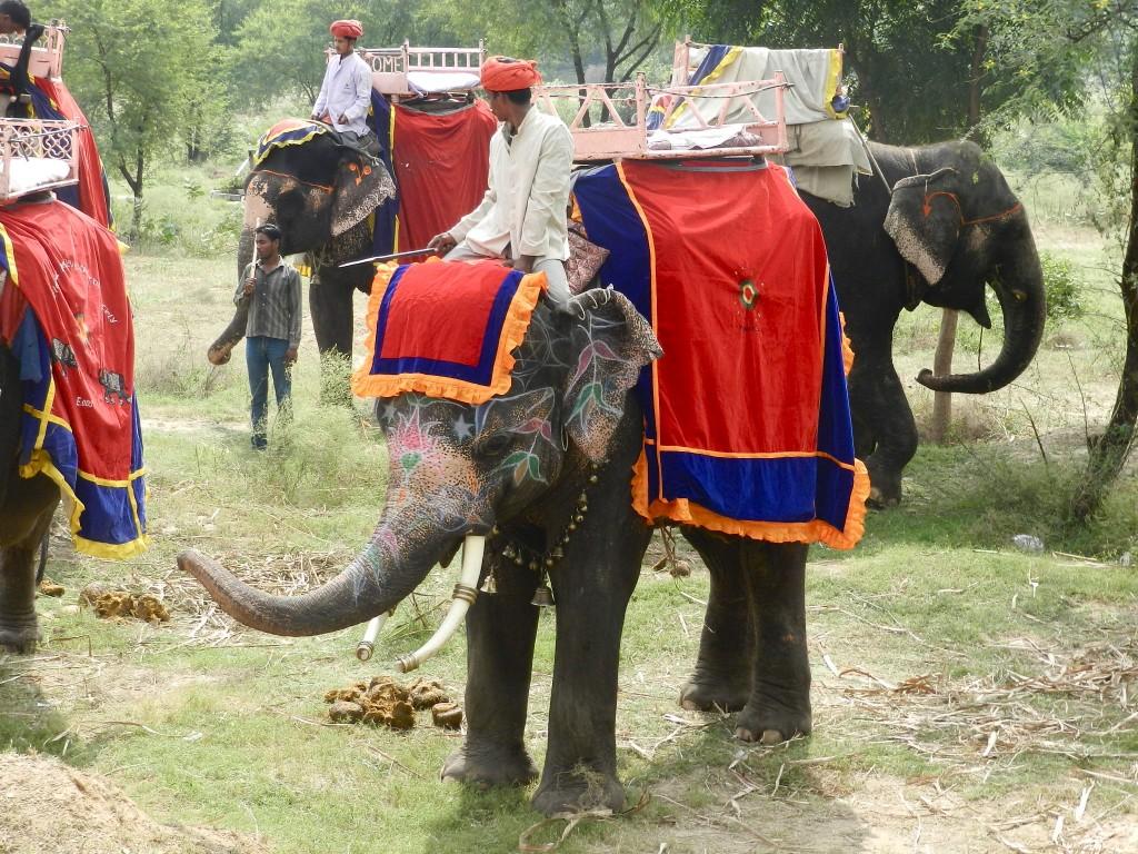 25 elefantes amber fort - jaipur - rajastao - india