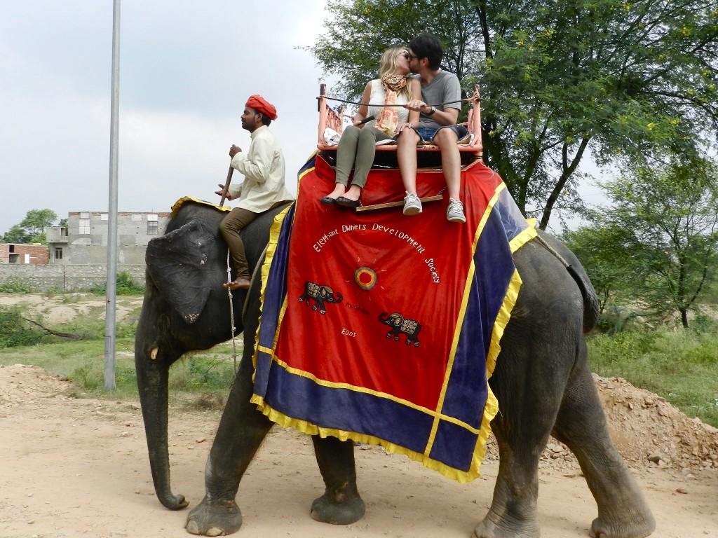 26 elefantes amber fort - jaipur - rajastao - india