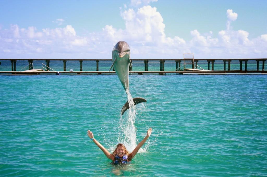 17 DOLPHIN EXPLORER - interação e nado com golfinhos - punta cana dicas de viagem republica dominicana caribe bavaro