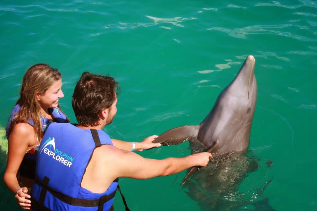 18 DOLPHIN EXPLORER - interação e nado com golfinhos - punta cana dicas de viagem republica dominicana caribe bavaro