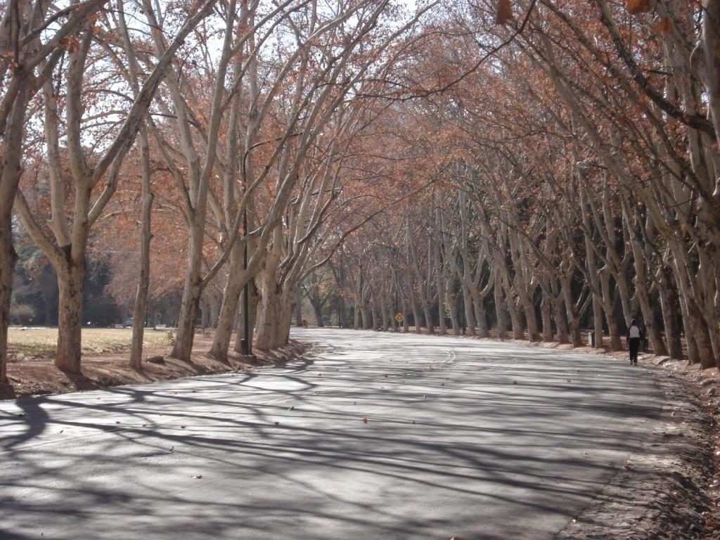 Árvores, árvores, árvores... Tudo foi plantado!