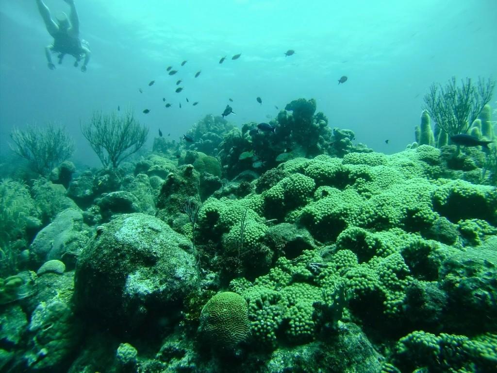 MERGULHO cilindro scuba Papagayo beach club jan thiel Curacao o que fazer dicas viagem praias 02