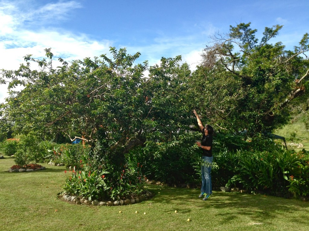 Ricardo pegando goiaba do pé no jardim do hotel