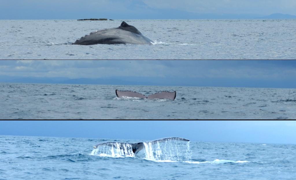 26.Isla Contadora Panama ballenas baleias whales LalaRebelo