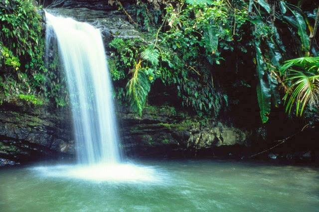 El Yunque Rainforest | foto: yukiyuresort.com