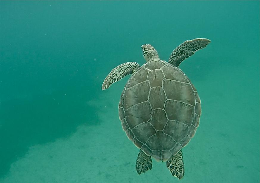 Playa Tamarindo tartarugas Isla Culebra Puerto Rico dicas blog lalarebelo 04
