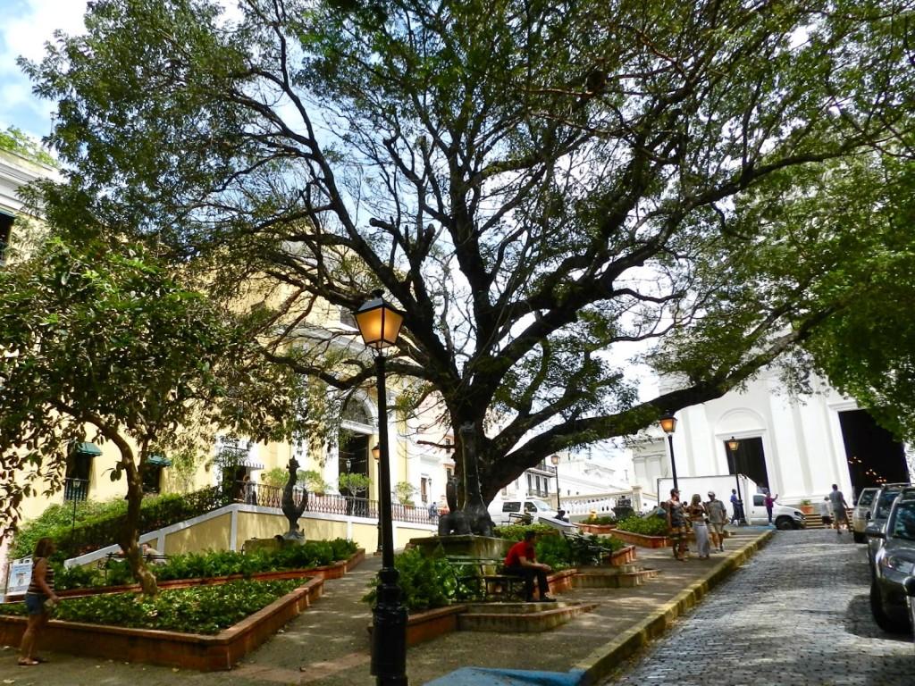 Plaza de La Catedral em VSJ | E essa árvore, gente?!