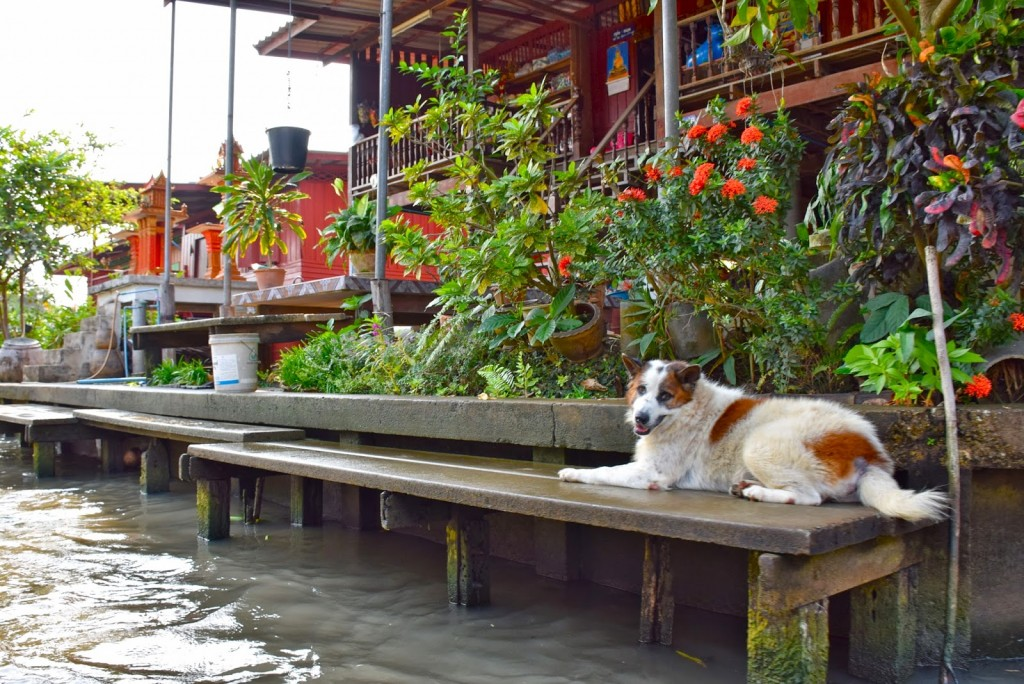 02 mercado flutuante damnoen saduak floating market - bangkok - dicas de viagem tailandia