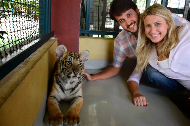 03 tiger kingdom chiang mai tailandia