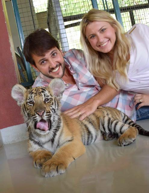 04 tiger kingdom chiang mai tailandia