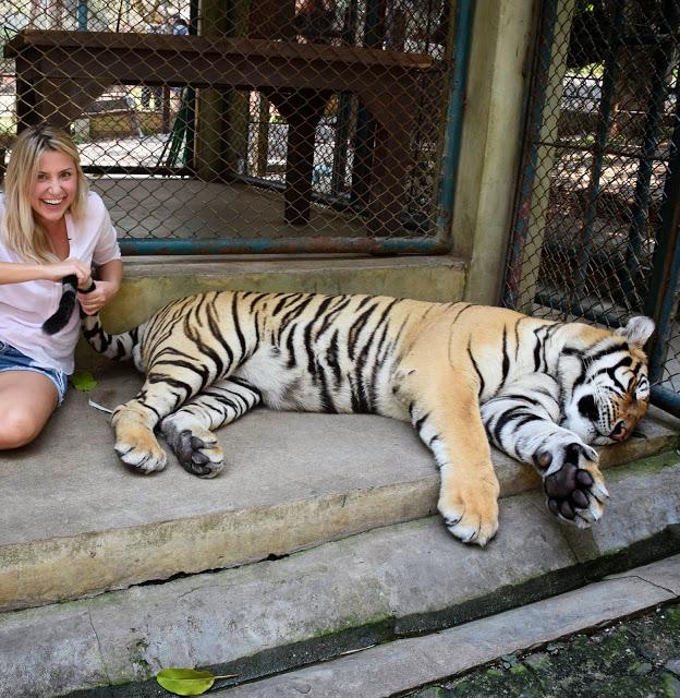 06 tiger kingdom chiang mai tailandia