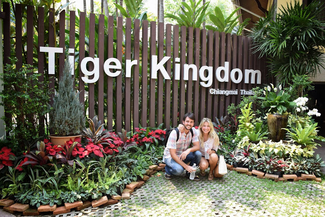 07 tiger kingdom chiang mai tailandia