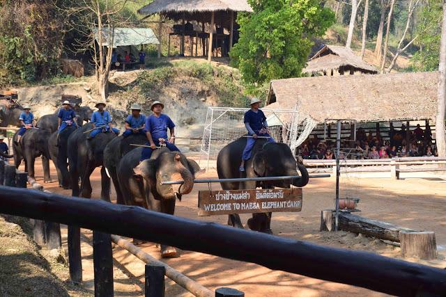 34 maesa elephant camp passeio de elefante chiang mai tailandia