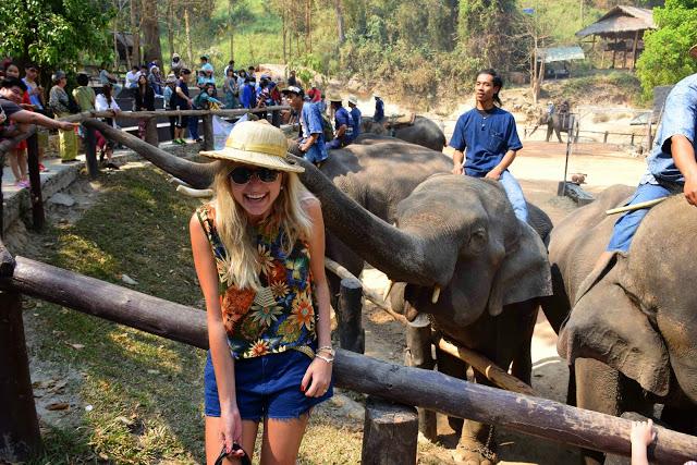 38 maesa elephant camp passeio de elefante chiang mai tailandia