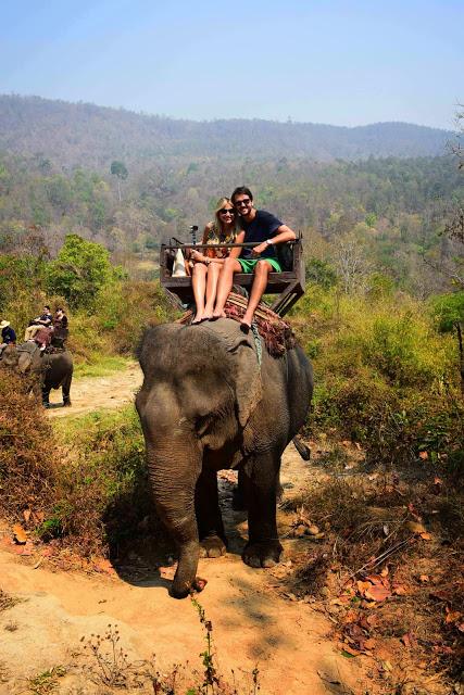 41 maesa elephant camp passeio de elefante chiang mai tailandia