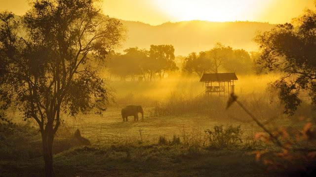 Acampamento de elefantes