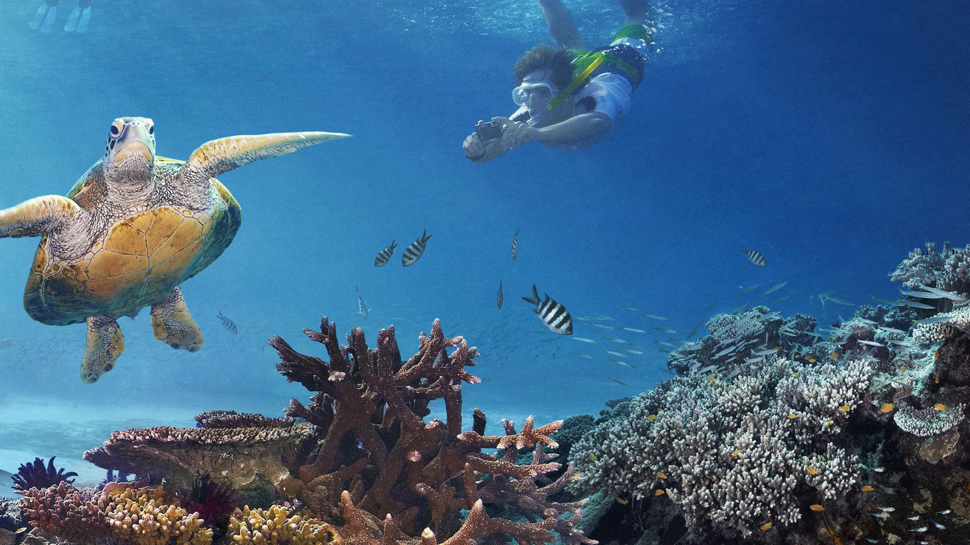 snorkel mergulho Grande Barreira de Corais australia