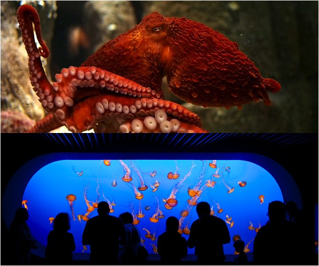 Monterey Bay Aquarium em Cannery Row | fotos: site oficial e rubinphotography.com