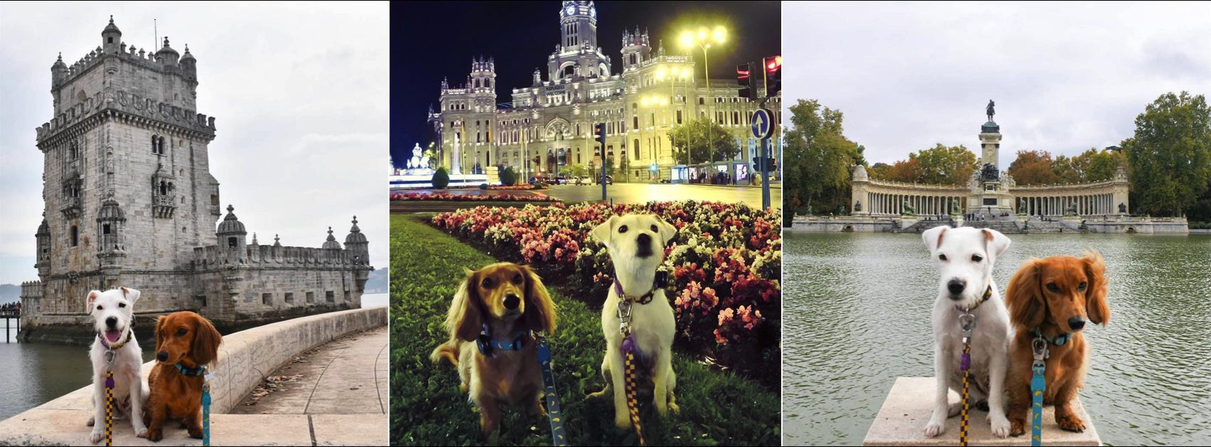 Os cachorrinhos pop's do Instagram, Django e Chloe, em uma viagem pela Europa