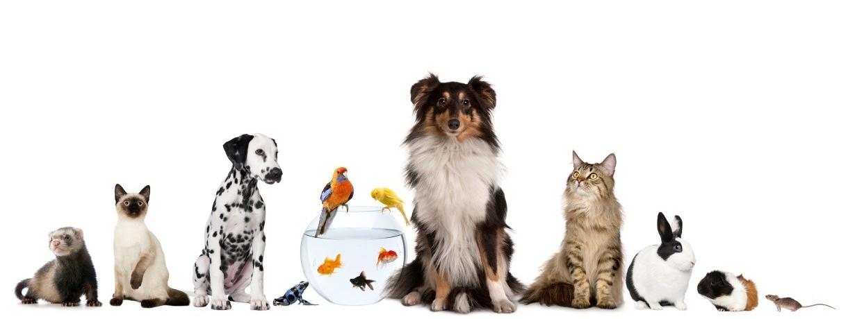 dog suitcase cachorro viagem aviao animais estimação internacionais pets dogtravel assessoria 2
