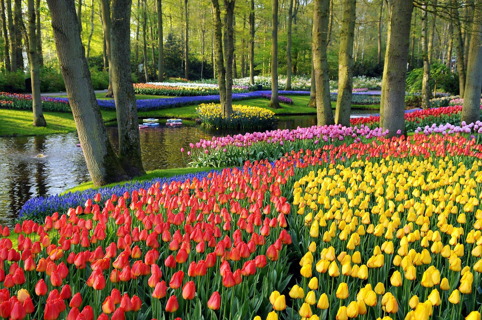 jardim de tulipas Keukenhof | foto: laidbackgardener.wordpress.com