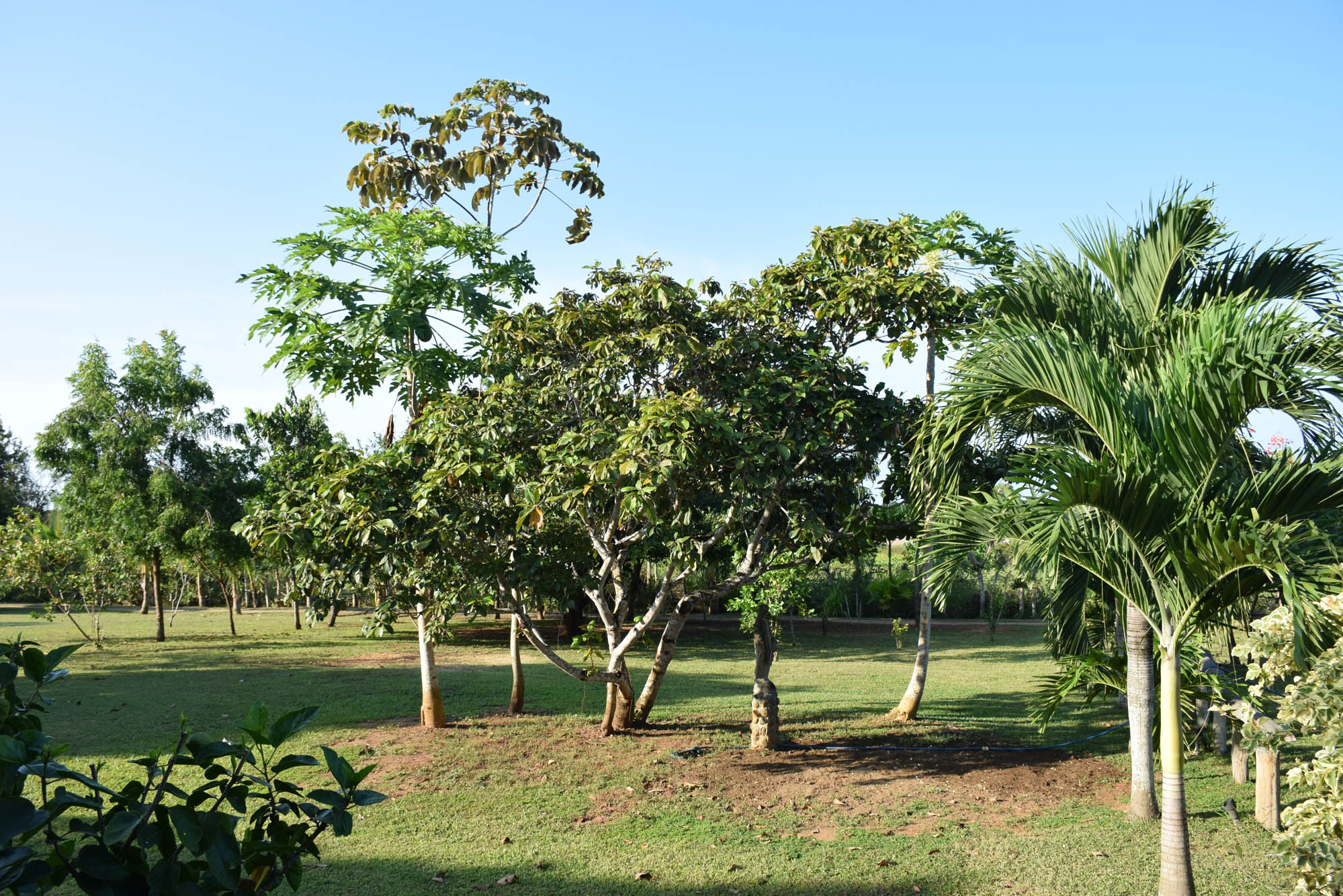 O jardim da pousada Casa Lajagua