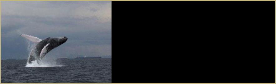 isla contadora panama baleias dicas