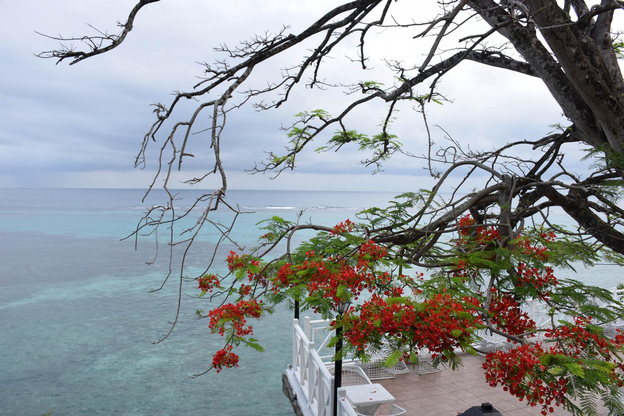 hibiscus-lodge-ocho-rios-jamaica