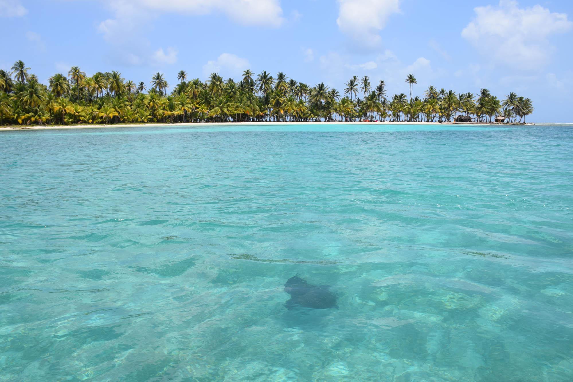 """A raia """"residente"""" da Salardup - encontramos com ela assim que pulamos no mar!"""