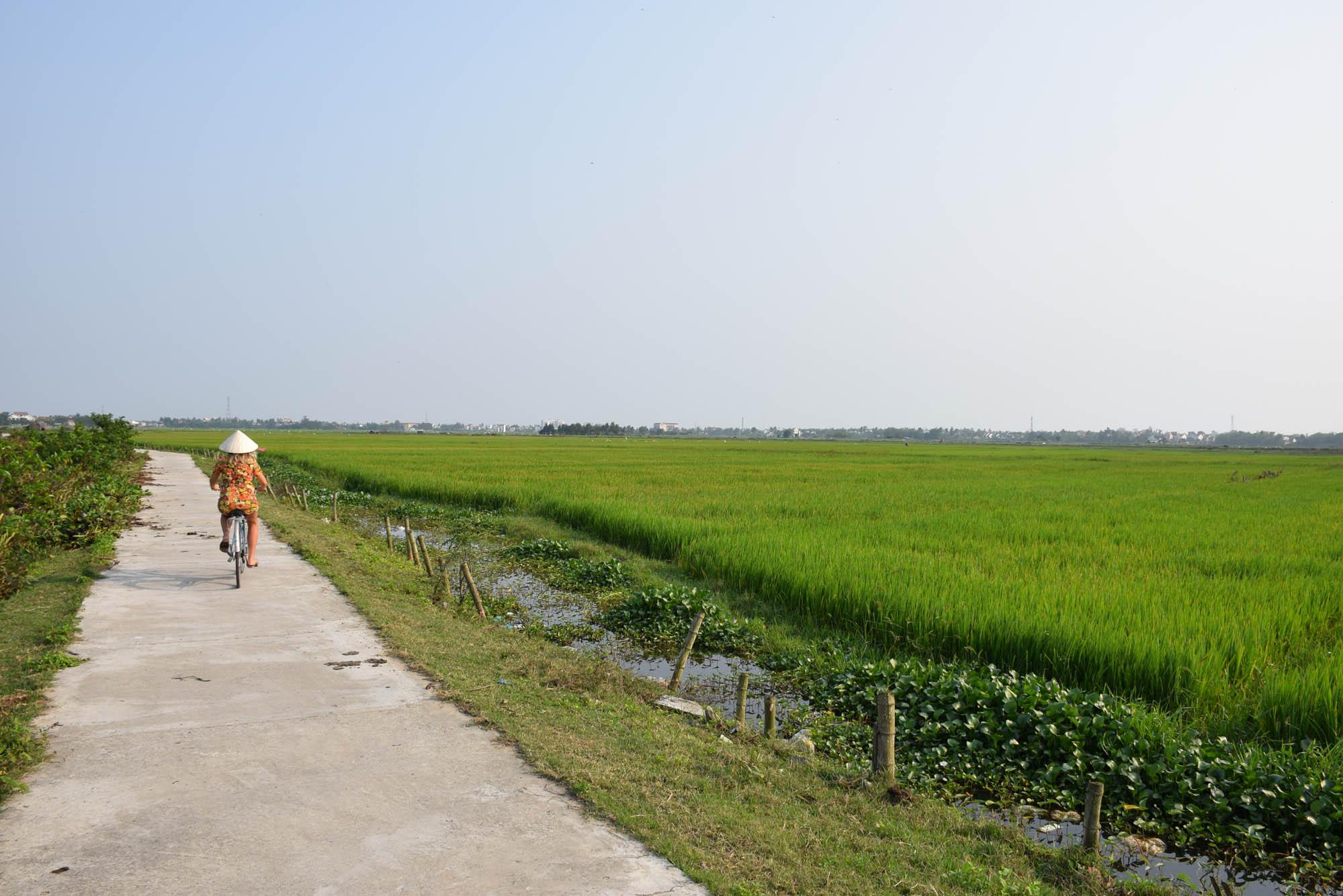 Pelas plantações de arroz no caminho entre Hoi An e a praia