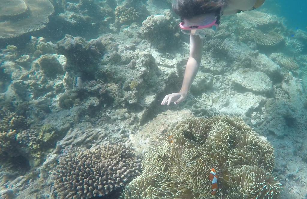 Achei o Nemo!!!