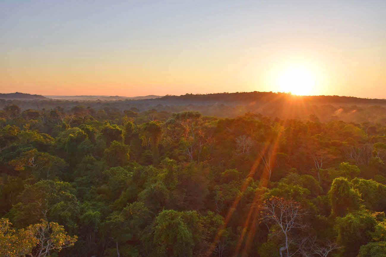 Sol nascendo sobre as árvores da Amazônia - Cristalino Lodge