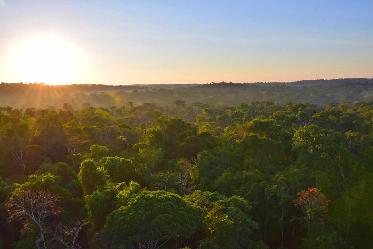 Sol nascendo na Floresta Amazônica - Torre 1 - Cristalino Lodge