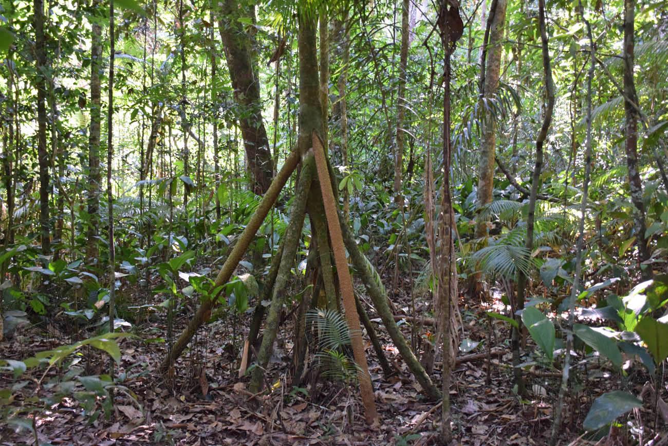 Na Trilha da Castanheira, Floresta Amazônica