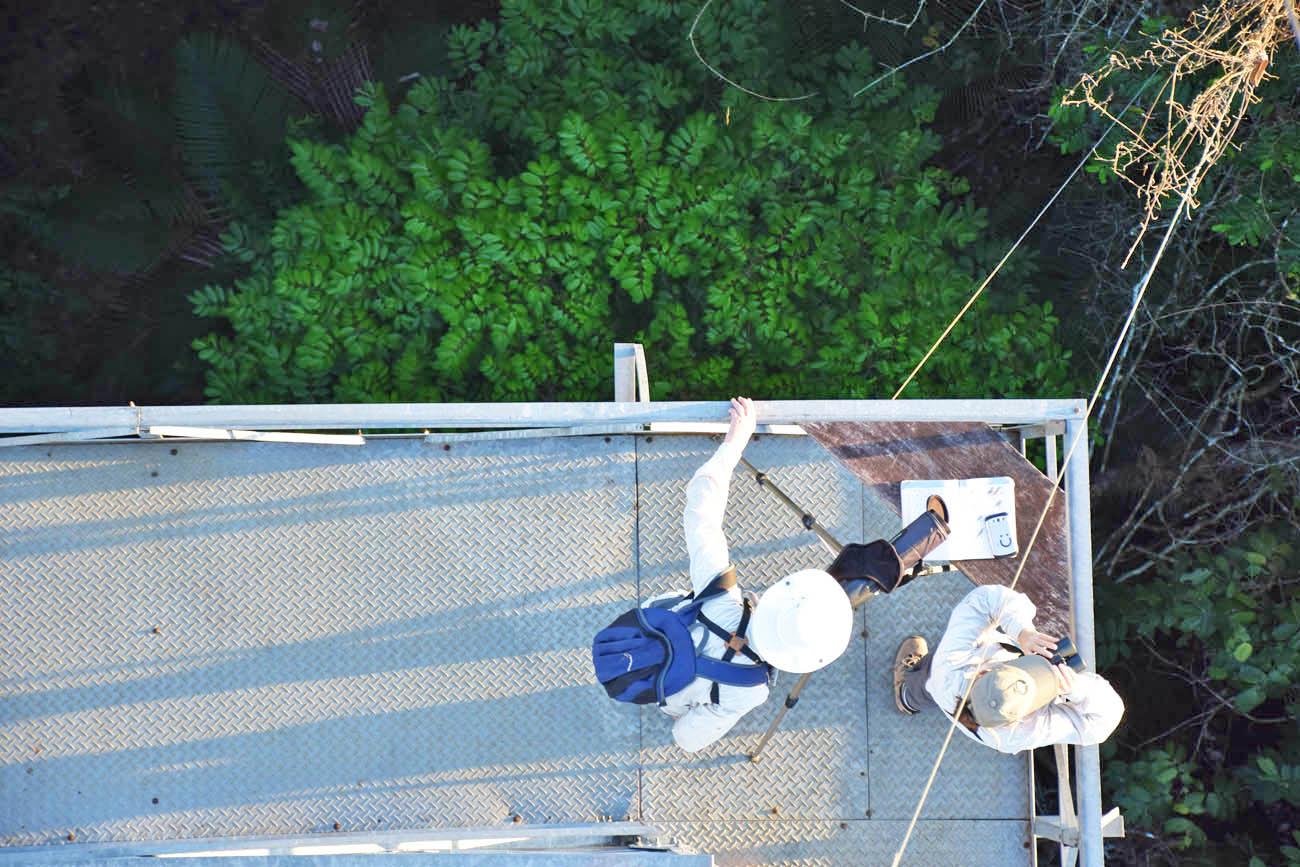 Torre de Observação 2 - Cristalino Lodge - Amazônia