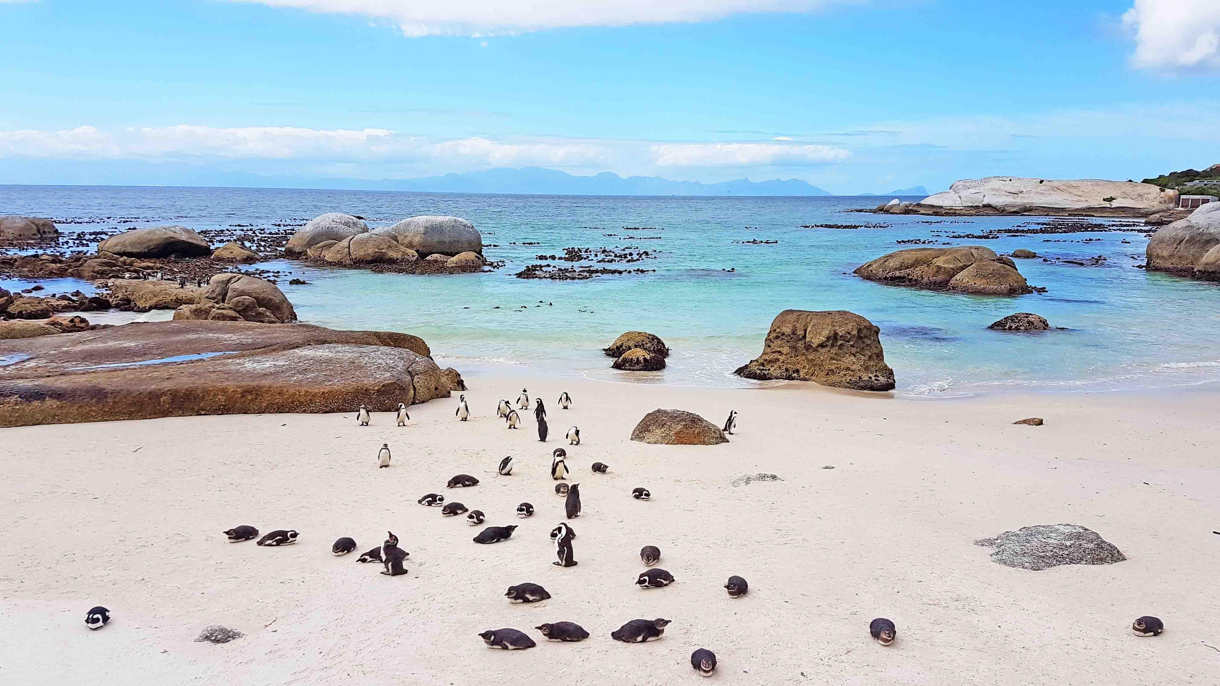 A colônia de pinguins africanos da Boulders Beach, em Simon's Town - pertinho da Cidade do Cabo