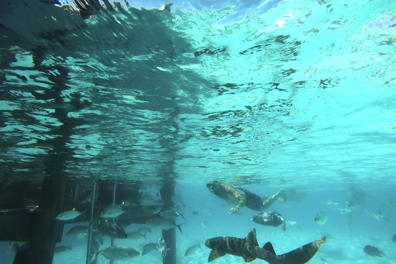 Mergulho com tubarões - Compass Cay - Exuma - Bahamas