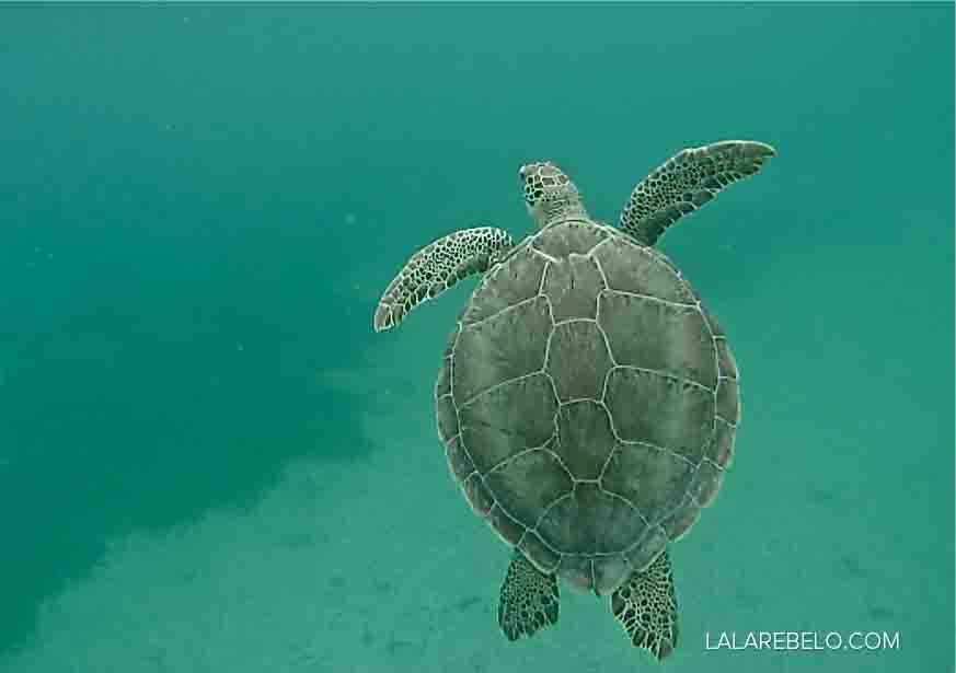 playa-tamarindo-tartarugas-isla-culebra-puerto-rico-dicas-blog-lalarebelo-04