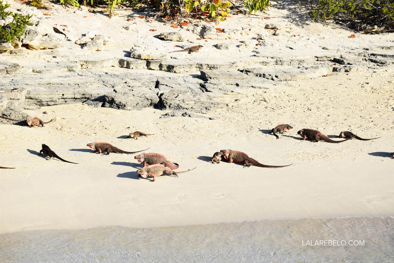Praia das Iguanas - Exuma - Bahamas