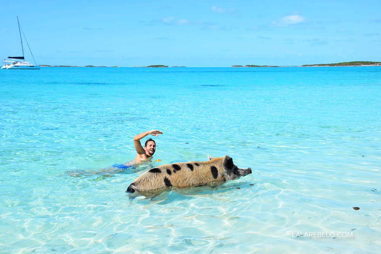 Porcos nadadores (falo do de pintinhas - meu marido é são paulino!!) :D | Pig Beach - Exuma - Bahamas