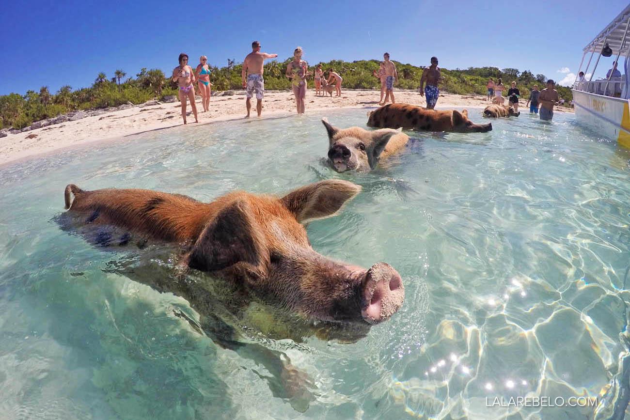 Chegando de barco na Pig Beach - Exuma - Bahamas