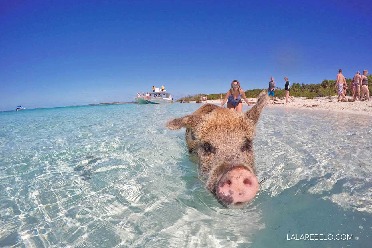 Eu e o porco! Pig Beach - Exuma - Bahamas