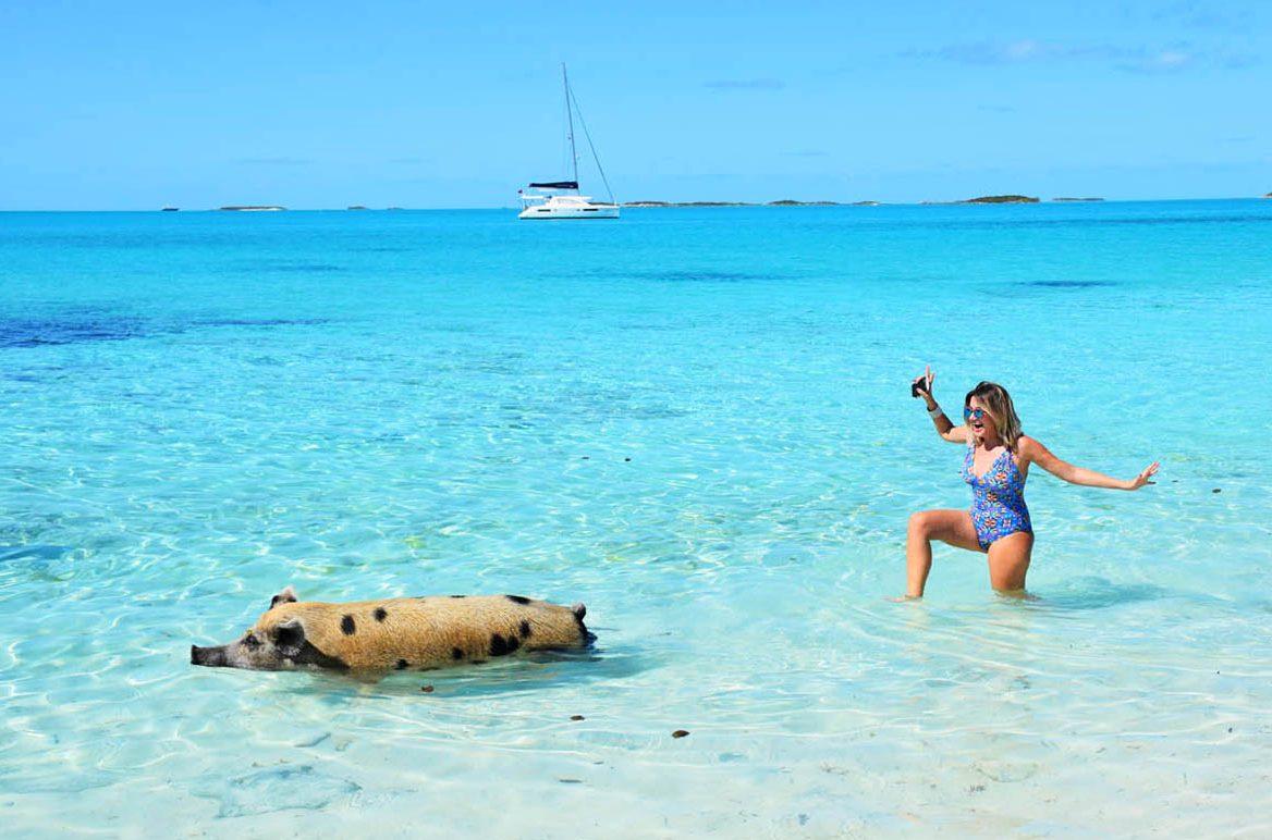 Pig Beach em Exuma, Bahamas - porquinhos nadadores | foto: Lala Rebelo
