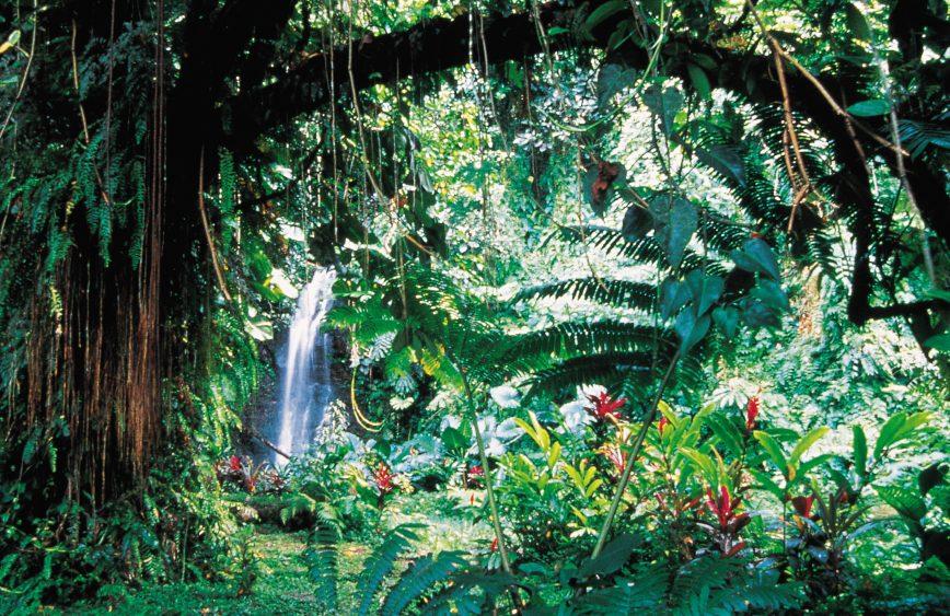 Cachoeira no Jardim de Vaipahi, na Costa Oeste | foto: © H. Leue