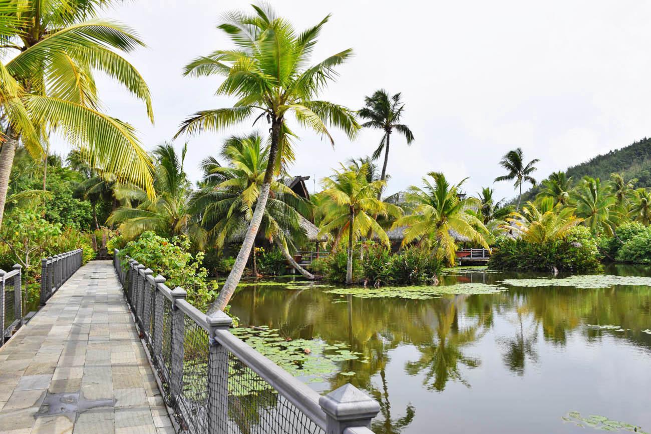 "Pelos ""corredores"" do hotel Maitai Lapita Village, Huahine - Muito verde!!| foto: Lala Rebelo"