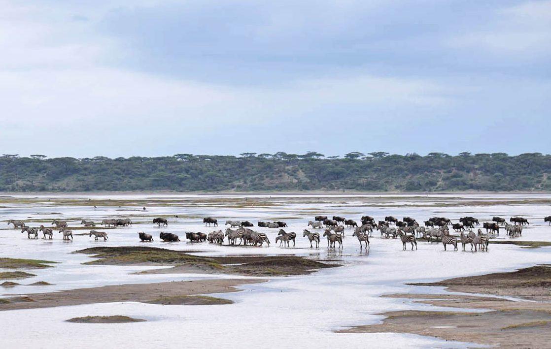 Safari Serengeti Tanzania - Grande Migração