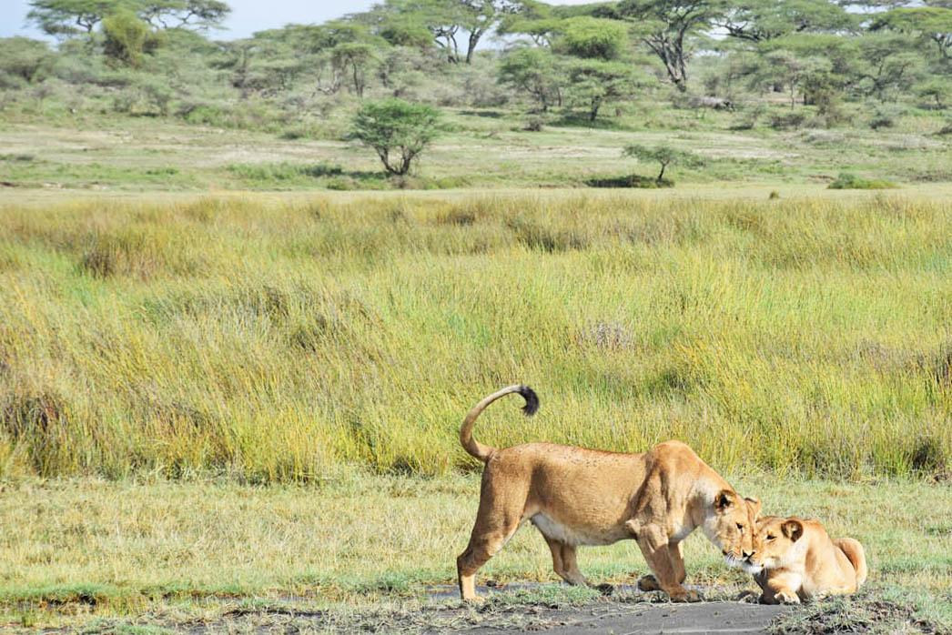 andBeyond Serengeti Under Canvas - Safari Serengeti Tanzania - Grande Migração